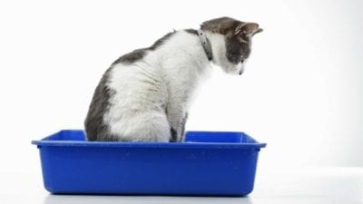 Train your cat to use kitty litter, odor eliminator