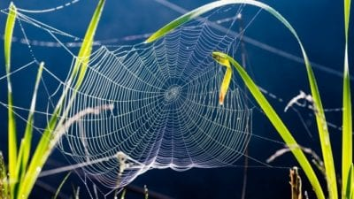 Answer A Spider Web Is An Active