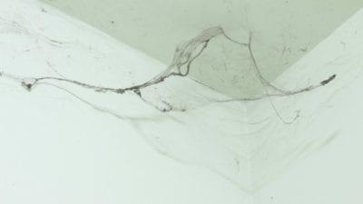 spider webs vs. cobwebs, spider web, cob web