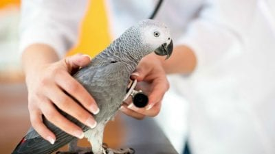 Animal Hoarders need to take parrot to vet