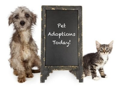 Animal shelter hosts adoption for animal hoarders