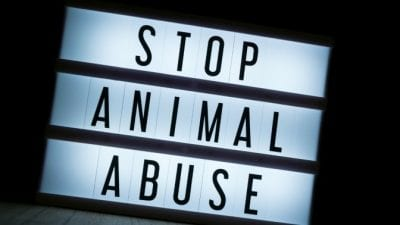 Stop animal abuse sign for animal hoarders