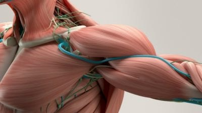 Cleaning Gene arm muscle