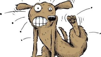 Habits itchy dog
