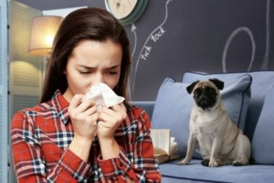 Allergic to Pets allergic to dogs