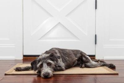Dog Poo, lazy dog