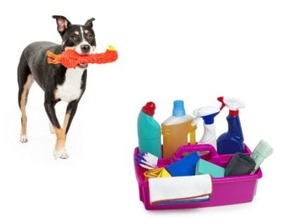 Incompatible Workers, Dog With Toy and Cleaning Caddy