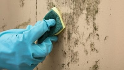 Clean or Paint First cleaning mold with sponge