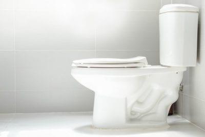 Constructive Criticism, Toilet