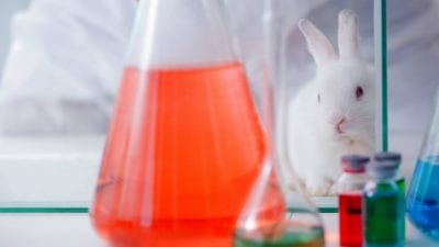 Cruelty-Free Cleaning Products rabbit looking at chemicals, testing