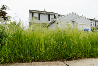 Appointment Reminders, House with Tall Grass
