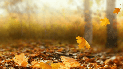 Area Won't Support Cleaning leaves falling in autumn
