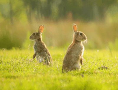 From Restaurant to Cleaning, Two Rabbits