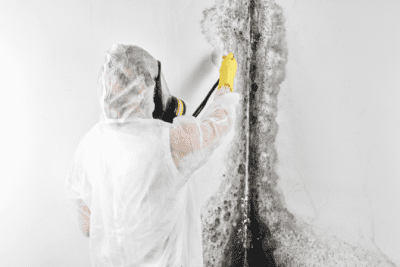 Mold and Mildew, Mold Specialist