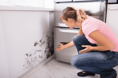 Mold and Mildew, Mold on Kitchen Wall