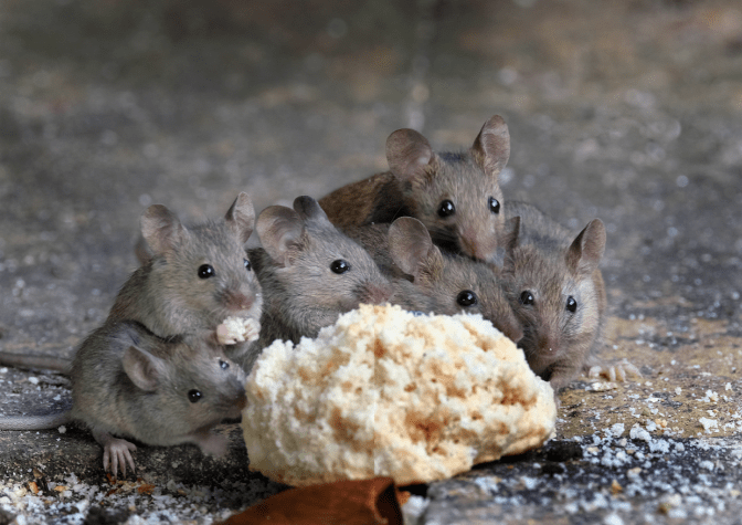 Non-Pinterest Pantry, Mice Eating
