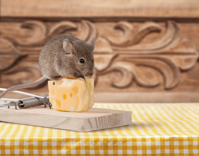 Non-Pinterest Pantry, Mouse With Cheese